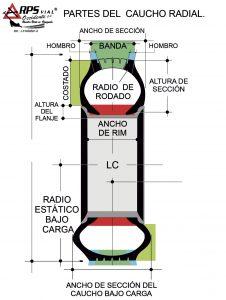 PARTES-DEL-CAUCHO-RADIAL-1